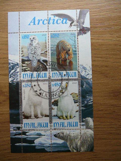 g151 Gyvunai Arktikos antsp.