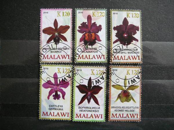 s748a Orchidejos Geles antsp.