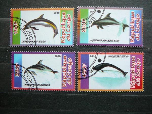 s597 Delfinai antsp.