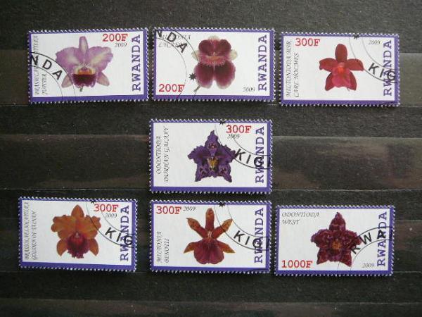 s585 Orchidejos Geles antsp.